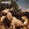 Interpol -